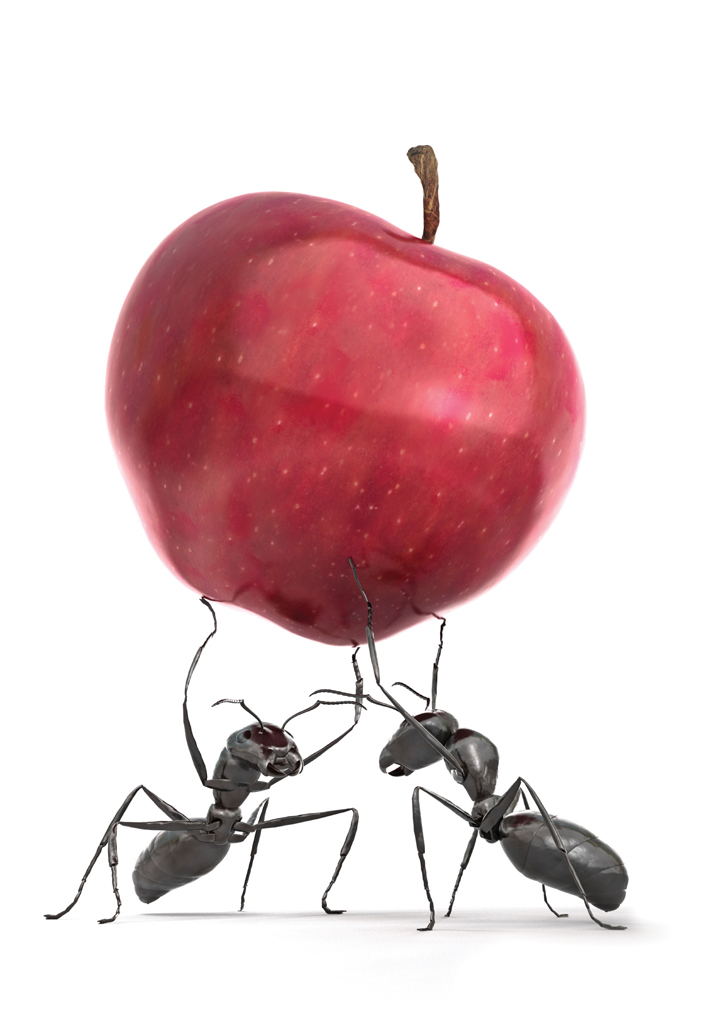 Ants Carrying An Apple Lubp